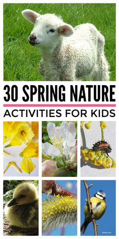 A bucket list of lovely spring activities for kids that will get them off their screens and happily outdoors connecting with nature. These simple spring activities, for children from toddlers, preschool and up at home and in the classroom include flower crafts, nest building, bug, bee & butterfly projects and more. #springactivities #springcrafts #springbucketlist #naturecrafts #natureschool Bee Activities, Outdoor Activities For Toddlers, Nature Activities, Spring Activities, Butterfly Project, Nest Building, Spring Nature, Nature Study, Lessons For Kids