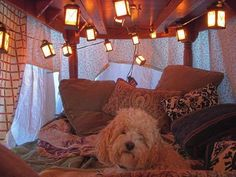How to build an indoor fort. Dog and lanterns necessary for full awesomeness.