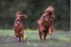 Bronte & Ryder  Barbour ~ first to the post wins!