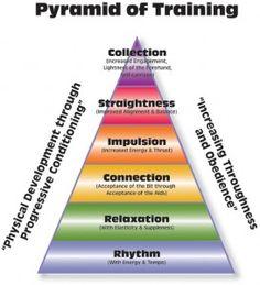 OTTB training, on the bit, horse training, dressage, training problems