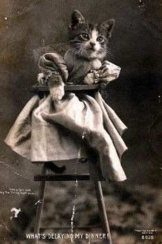 LOL cats stem from VICTORIAN ERA, apparently! (Captions and all.)
