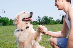 What Determines Whether a Dog is being Good or Bad? | Pets4Homes