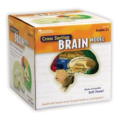 Learning Resources Cross-Section Human Brain Model Brain Models, Science Models, Learning Resources, Kids Learning, Kids Doctor Kit, Cross Section, Test Preparation, Science Books, Science Fair
