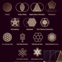 geometric patterns in nature - Google Search