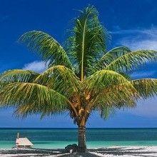 Isola di Roatan - Honduras