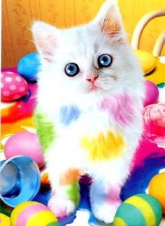 Little Cat Manchitas Sweet
