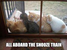 Love these kitties!!!