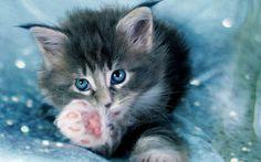 2017-03-08 - Widescreen Wallpapers: cat image - #1632415