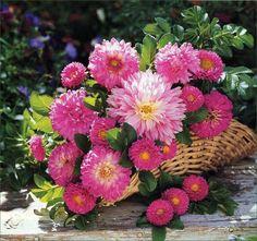 Imágenes bonitas con flores y plantas