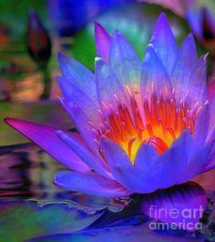 Blue Lotus by Byron Fli Walker