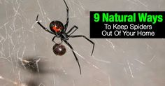 9-natural-ways-spiders-09302015