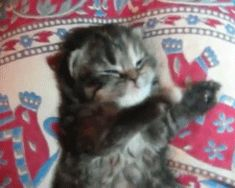 I love cat gifs and dog gifs. Funny Cats, Cute Cats, all the time.Big animals gif lover too. Kitten Beds, Baby Kittens, Little Kittens, Kittens Cutest, Cats And Kittens, Kitten Gif, Cat Gif, Crazy Cat Lady, Crazy Cats