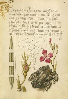 Joris Hoefnagel, illuminator, Georg Bocskay, scribe, pages from Mira Calligraphiae monumenta, 1561/96. Via Getty Search