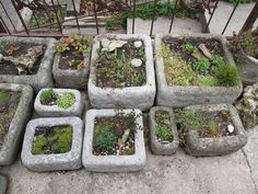 Garden containers, Garden planters, Plants, Garden projects, Container gardening, Container plants - Last week many of us fell in love with Peg's hypertufa trough gardens, so today she's back to tell - #Gardencontainers