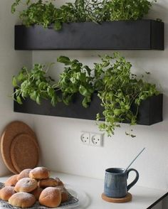 Black and basic wall boxes are an ideal option for growing herbs indoors within easy reach of your kitchen and preparation surface. Grow your own herbs all year long in a well-lit area saving you money at the market and keeping your space green and happy! Kitchen Herbs, Herb Garden In Kitchen, Diy Herb Garden, Home And Garden, Green Garden, Herbs Garden, Garden Pests, Wall Herb Garden Indoor, Hanging Herb Gardens