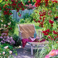 Garden retreat, Planting Roses, Rose Gardening, Designing with Roses, English Roses, Climbing Roses, Rose Tess of The d'Urbervilles, David Austin Roses, shrub roses, fragrant roses, Favorite roses, Rose 'Flammentanz'