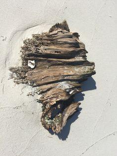 Coolest driftwood I think I've seen!  East Ship Island