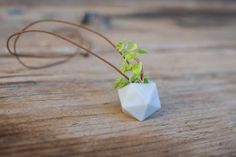 wearable faceted planter from Colleen Jordan