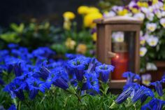 Garden, Flower, Cemetery, Mourning, Light, Blue #garden, #flower, #cemetery, #mourning, #light, #blue
