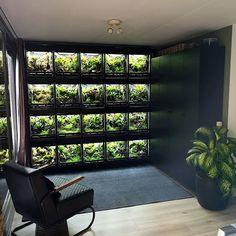 The frog wall 😍 Reptile Habitat, Reptile Room, Reptile Cage, Terrariums, Terrarium Tank, Snake Terrarium, Rabbit Cages, Gecko Vivarium, Aquariums