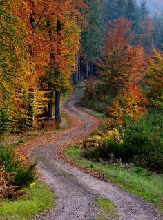 Winding forest road in the fall (no location given) by Hendryk Cantero on cr. Beautiful World, Beautiful Places, Forest Road, Country Landscaping, Landscaping Design, Autumn Scenery, Winding Road, Fall Pictures, Beautiful Landscapes