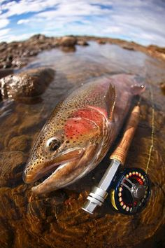 Fly Fishing / Rainbow trout / Fly rod / Fly reel #rainbow trout #flyfising