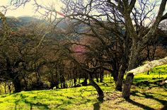 Contra Costa County Park | Flickr - Photo Sharing!