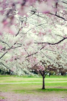 love the spring blooming trees, when the leaves first begin to pop out..