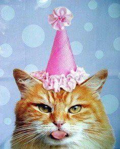 Birthday Wishes Happy Cats Kitty Cat Funny Memes