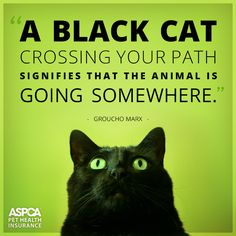 In most cultures, black cats are a sign of good luck.