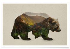 North American Brown Bear - Davies Babies - Affiche premium