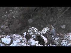 This viper hunts birds with its spider-shaped tail lure | predator-vs-prey | Earth Touch News