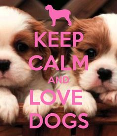 For all of  you guys out there studying for finals and stressing, here is a wise, wise saying: Keep calm and love dogs. Pretty sure they are the cutest things ever.