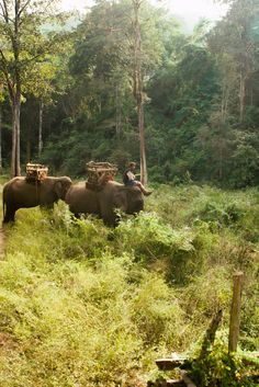 We spy elephants! Check out all of Thailand's natural, green jungles and spot your own adventure!
