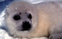 sweet face....who could hurt such a beautiful creature??? but...it happens! STOP THE MADNESS!!!