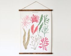 Seaweeds canvas poster  vintage educational chart by ARMINHO, $70.00