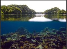 Palau's coral reefs are surprisingly resistant to ocean acidification. [credit: Woods Hole Oceanographic Institute]