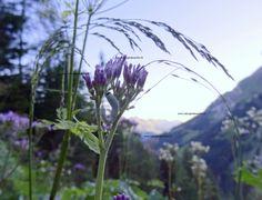 mystische bilder Mountains, Website, Nature, Plants, Travel, Mystical Pictures, Viajes, Traveling, Flora