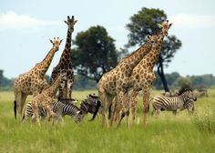 The Vumbura Concession - The Okavango Delta - Botswana | Audley Travel