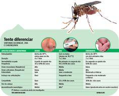 Uma nova candidata a vacina de DNA contra o vírus da zika, desenvolvida pelos Institutos Nacionais de Saúde (NIH, na sigla em inglês) dos Estados Unidos, mostrou alto nível de eficiência em testes com macacos. Aplicada em duas doses, o imunizante deu proteção total a 17 primatas em um grupo de 18 animais. (26/09/2016) #Vacina #Virus #Cura Chikungunya #Zika #Dengue #Prevenção #Infográfico #Infografia #HojeEmDia