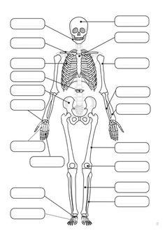 skeleton label worksheet with answer key anatomy and. Black Bedroom Furniture Sets. Home Design Ideas