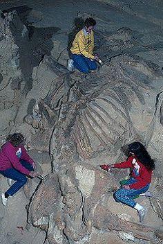 paleontology - Google Search