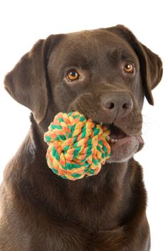 Toys and games for labs