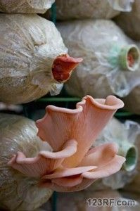 Small-shrooms