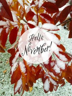 Sharing a wintery hello to all my dear readers. Is it looking more like fall or winter near you? Whatever season you are in today, hoping this new month is the beginning of many wonderful adventures. Take time to enjoy. Hallo November, Welcome November, Sweet November, October Country, November Month, Hello December, November Images, November Pictures, November Quotes