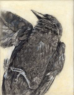Ingrid Blixt ... The Crow - Fine art print from original drawing on wood.via Etsy.