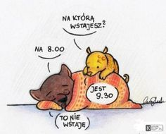 Na którą wstajesz Weekend Humor, Wombat, More Than Words, Good Mood, Funny Comics, Memes, True Stories, Winnie The Pooh, Best Quotes