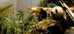 Un jour à Tokyo : nature culture et découverte à Ueno