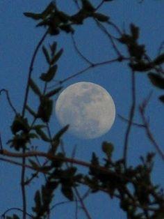 Waxing Moon moon-madness