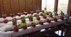 How To Build a Gravity-Based PVC Aquaponic Garden Very Easily